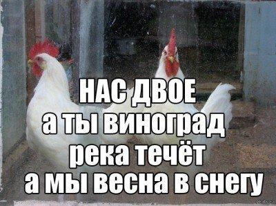 Как разговаривают россияне относится не ко всем  - lekjf.jpg