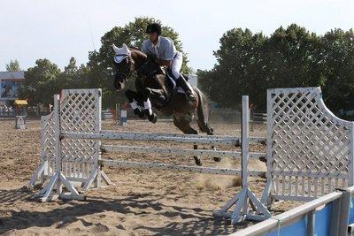 Элитный конь для профессионального спорта. Продам или Обменяю. - 2.jpg