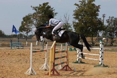 Элитный конь для профессионального спорта. Продам или Обменяю. - 3.jpg