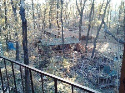 Какой-то дом - путиловский-лес-1.jpg